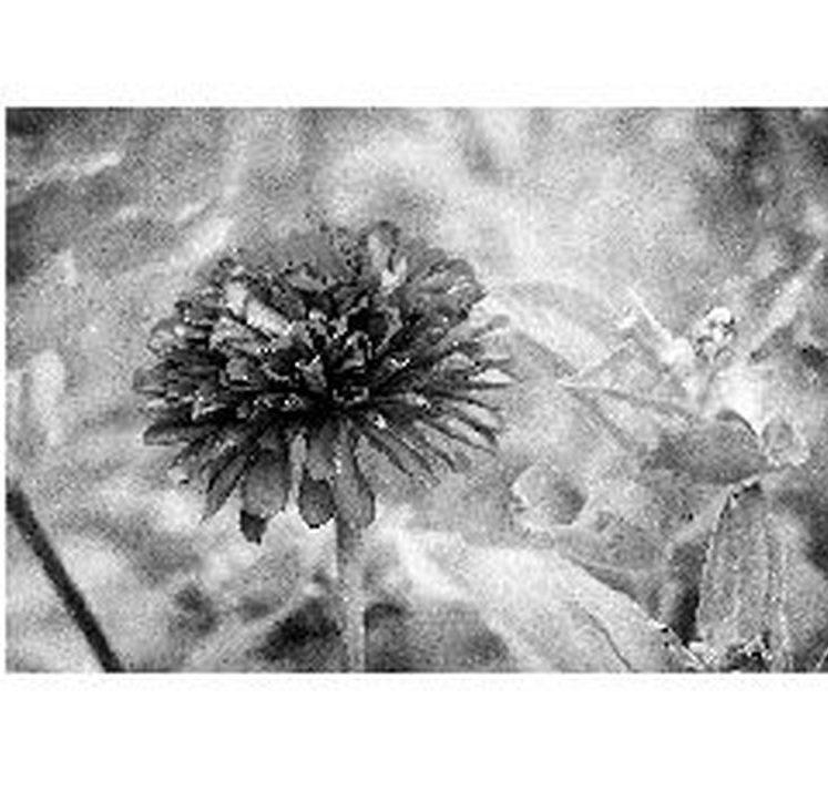 Photo-epreuve pour gravure